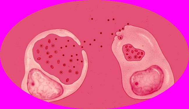 Chlamydioza diagnostyka i leczenie
